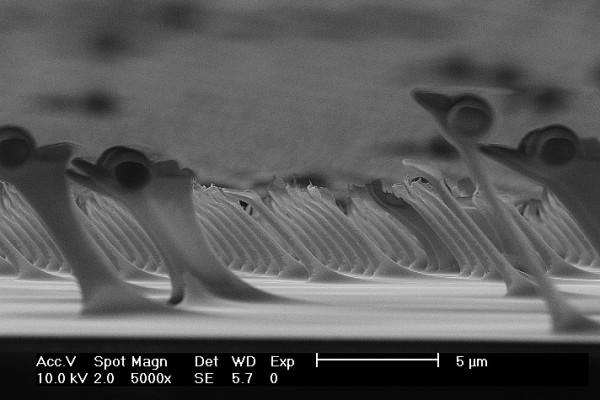 Most Bizarre Micrograph